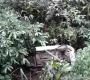 Camacan: Veículos sofrem acidente na Rodovia de acesso a Pau Brasil, veja vídeo