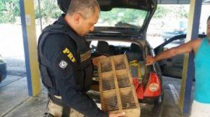 animais silvestres resgate bahia ubaitaba 580x323 e1537299667137 300x167 - Ubaitaba: PRF apreende mais de 200 animais com contrabandista - o tempo jornalismo