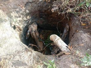 Cav 300x225 - Cavalo cai em poço e operação de resgate leva 5 horas na Bahia - o tempo jornalismo