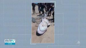 foto e1539168121546 300x169 - Pescadores capturam tubarão-tigre com 2m de comprimento e 140 kg - o tempo jornalismo
