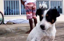 Homem é morto e cão de vítima fica ao lado do corpo até chegada da polícia