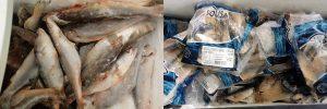 page 300x100 - Camacan: Aproveite a promoção de peixes do Super Sacolão - o tempo jornalismo