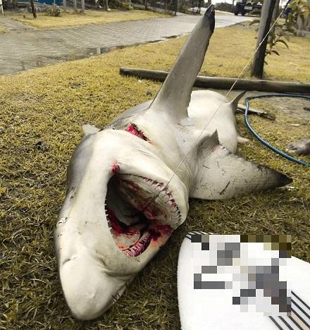 Bahia: Tubarão é achado por pescadores em praia