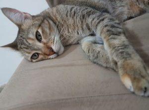 IMAGEM NOTICIA 5 1XXXX 300x221 - Após separação, Justiça decide que gato Mingau terá guarda compartilhada por tutores - o tempo jornalismo