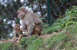 Sucesso de testes em macacos deixa cientistas otimistas sobre vacina contra o HIV